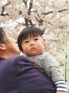 桜の写真・画像素材[430797]