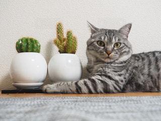 猫の写真・画像素材[695100]