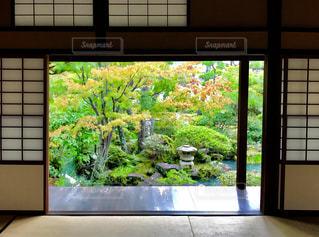 障子の向こうの日本庭園の写真・画像素材[881900]