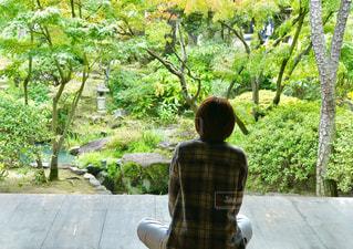 縁側から眺める日本庭園の写真・画像素材[881901]