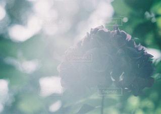 近くの植物のアップの写真・画像素材[897905]