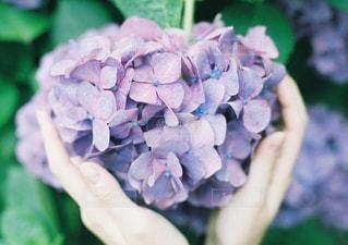近くの花のアップの写真・画像素材[1285657]
