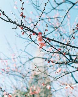 木の枝にとまった鳥の写真・画像素材[1285691]