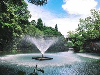 井の頭恩賜公園の噴水の写真・画像素材[2719085]