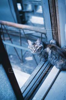 猫の写真・画像素材[295327]
