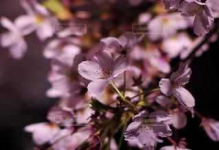 花 - No.429506