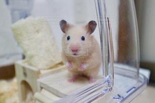 動物の写真・画像素材[668983]