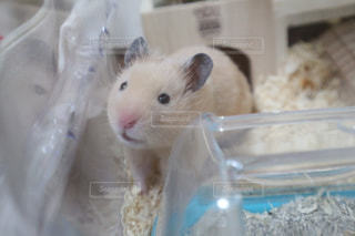 動物の写真・画像素材[669102]