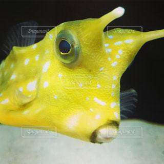 魚の写真・画像素材[297687]