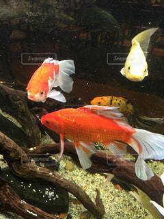 魚 - No.301788