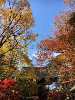 森の大きな木の写真・画像素材[895182]