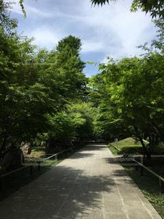 道の端に木の写真・画像素材[1175692]