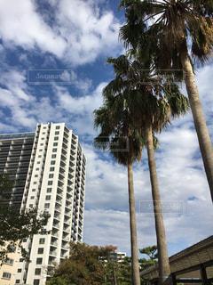 背の高い建物とヤシの木の都市の景色の写真・画像素材[1556390]
