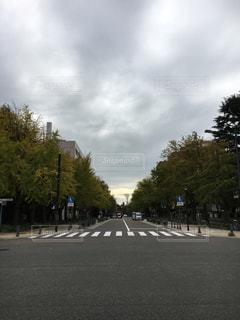 通り側の木と空の道の写真・画像素材[1601038]