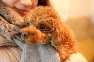 犬の写真・画像素材[297678]