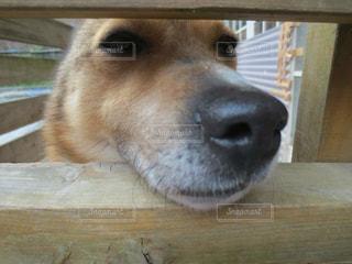 犬 - No.315281