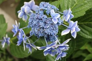 花の写真・画像素材[586879]