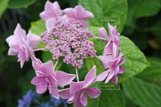 花の写真・画像素材[586880]