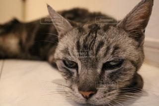 猫 - No.591566