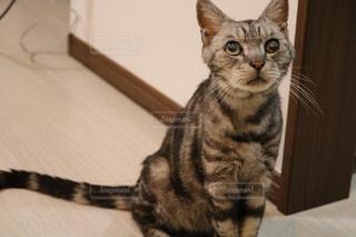 猫の写真・画像素材[596371]