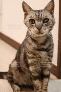猫 - No.596372