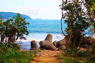 水の体の横にあるツリー - No.882655