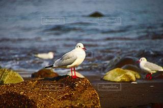 水の体の横に小さな鳥立って - No.883984