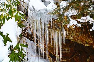 滝の横にあるツリーの写真・画像素材[972576]