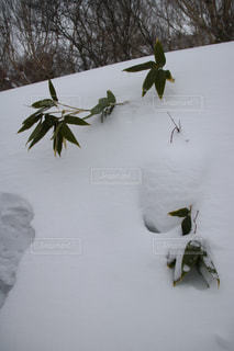 雪に覆われた斜面をスキーに乗る男の写真・画像素材[982046]