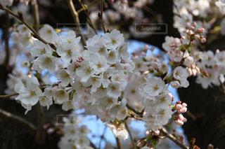 近くの花のアップの写真・画像素材[1084784]