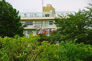 建物の前にツリーの写真・画像素材[1163314]