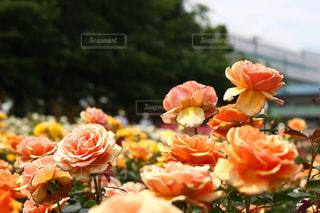 近くの花のアップの写真・画像素材[1178508]