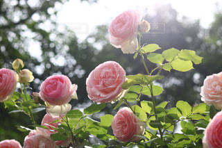 近くの花のアップの写真・画像素材[1178597]
