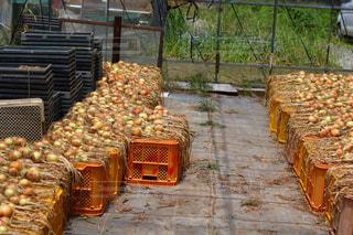 農産物の完全な箱の写真・画像素材[1223351]