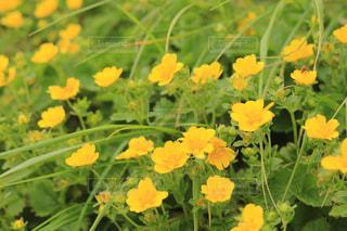 近くの花のアップの写真・画像素材[1303390]