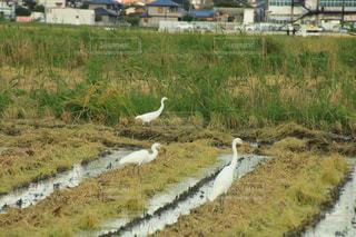 草の上に鳥立ってカバー フィールドの写真・画像素材[1507146]