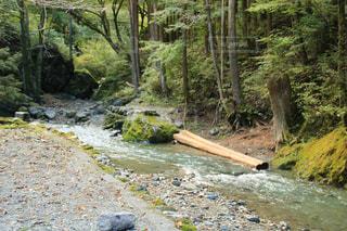 森を流れる川の写真・画像素材[1525402]