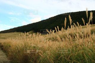 緑豊かな緑の草原で放牧動物の群れの写真・画像素材[1531991]