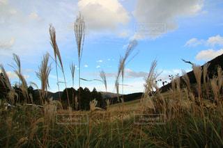 芝生のフィールドで植物の写真・画像素材[1531995]