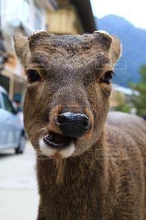 近くに動物のアップの写真・画像素材[1671560]