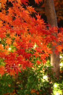 オレンジ色の花と木の写真・画像素材[1700157]