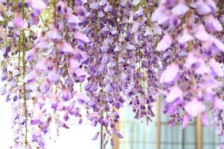 植物の上の紫色の花の写真・画像素材[3165784]
