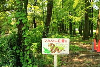 森の前に見る看板の写真・画像素材[3446840]