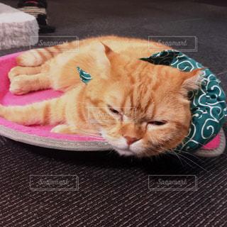 猫,にゃんこ,ねこ,旅,睡眠,眠い,疲れ