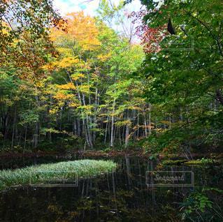 木々に囲まれた池 - No.805508