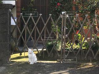 猫の写真・画像素材[313253]