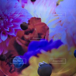 近くの花のアップの写真・画像素材[718204]