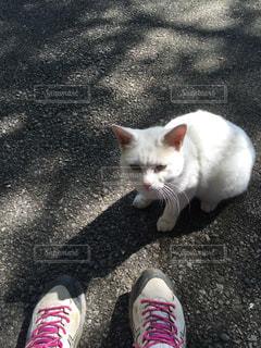 猫の写真・画像素材[297245]