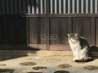 猫の写真・画像素材[302306]
