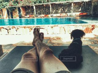 犬の写真・画像素材[300247]